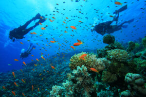 Scuba diving caribbean