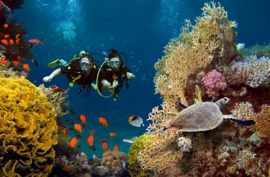Top 5 Reasons to go Scuba Diving in Jamaica - Couples Resorts