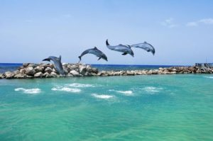 Dolphins Jumping in Dolphin Cove